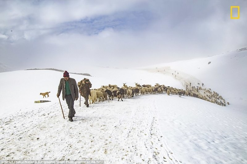 Пастухи овец в Гималаях. Нитиш Тхакур, Индия National Geographic Travel, National Geographic Traveler, national geograhic, лучшие фото года, лучшие фотографии, путешествия, фотоконкурс, фотоконкурсы. природа