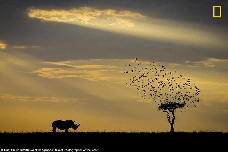 Носорог в национальном парке Масаи Мара, Кения. Хай Чуин Сим, Малайзия National Geographic Travel, National Geographic Traveler, national geograhic, лучшие фото года, лучшие фотографии, путешествия, фотоконкурс, фотоконкурсы. природа
