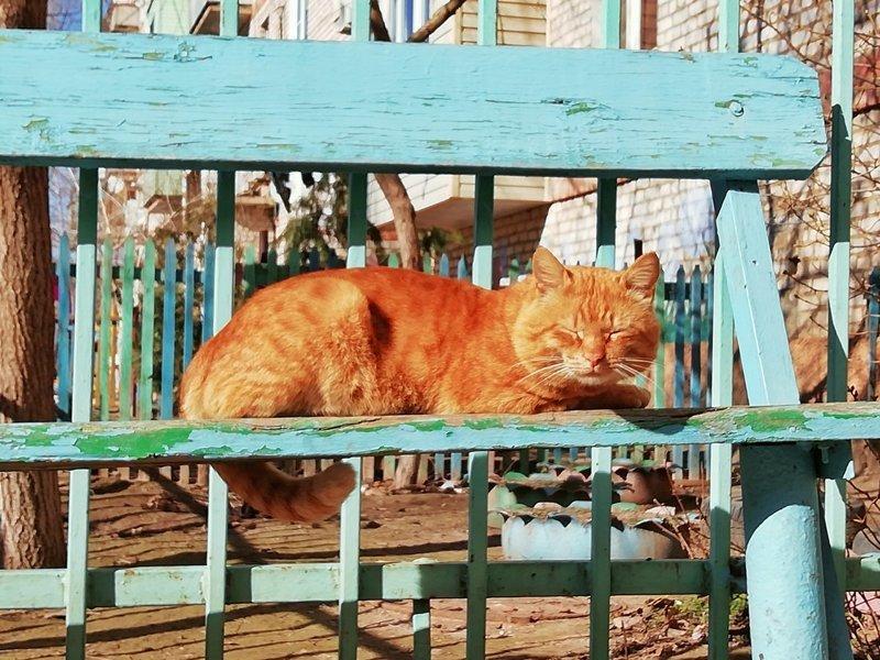 Очень колоритные уличные коты город, кот, улица, уличные кошки, эстетика