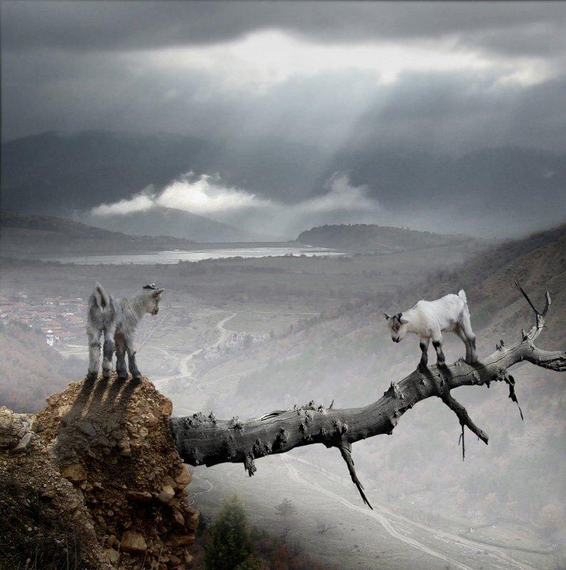 Красавцы, правда ведь? горные козлы, животные, удивительное, чудо. скалы