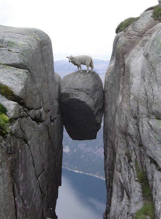 Козлы и горы - высший пилотаж, леденящий душу горные козлы, животные, удивительное, чудо. скалы