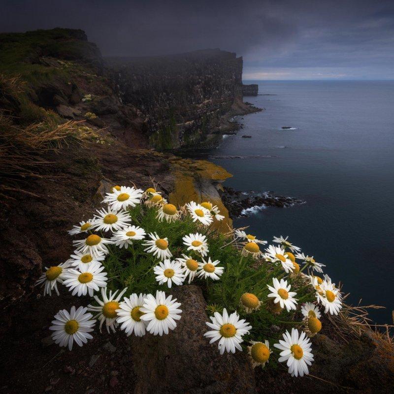 Исландия день, животные, кадр, люди, мир, снимок, фото, фотоподборка