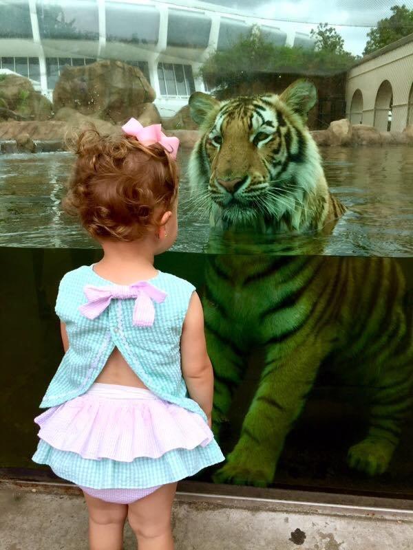 Знакомство с тигром день, животные, кадр, люди, мир, снимок, фото, фотоподборка