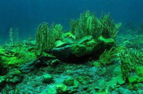 Загрязнение Байкала приобретает характер катастрофы ynews, Стоки, байкал, водоросли, загрязнение окружающей среды, экология