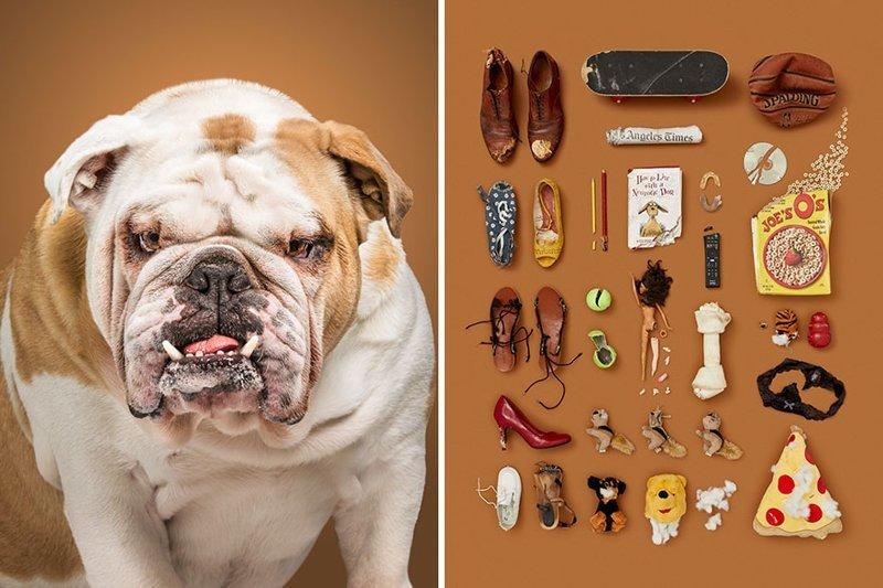 1.  забавно, загадка, портреты животных, собака, собаки, фотопроект, характер, характеристики