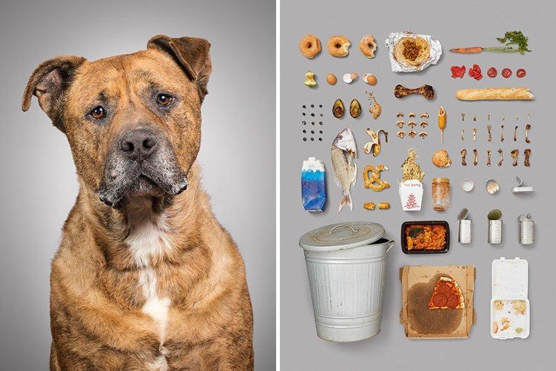 2.  забавно, загадка, портреты животных, собака, собаки, фотопроект, характер, характеристики
