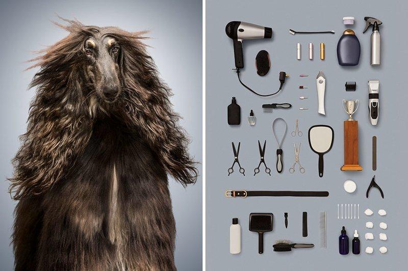 5.  забавно, загадка, портреты животных, собака, собаки, фотопроект, характер, характеристики