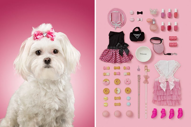 6.  забавно, загадка, портреты животных, собака, собаки, фотопроект, характер, характеристики
