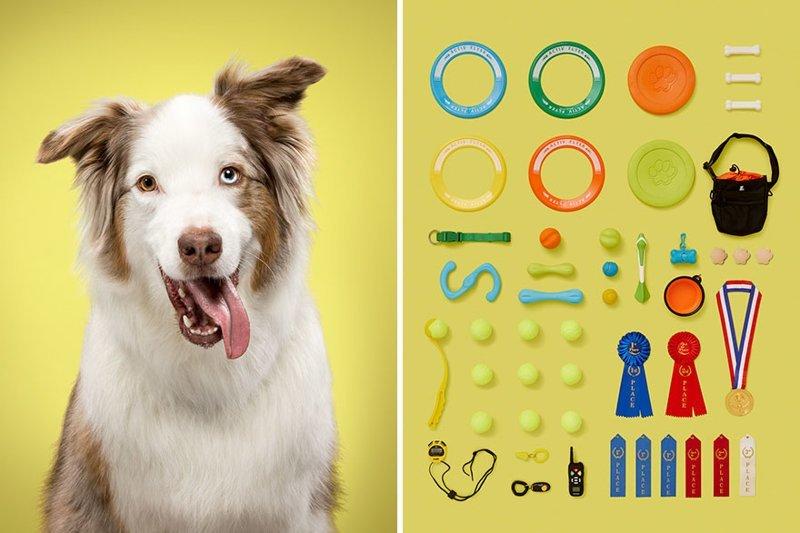 4.  забавно, загадка, портреты животных, собака, собаки, фотопроект, характер, характеристики