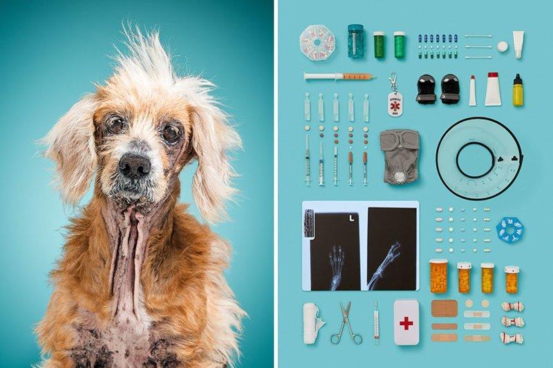 3.  забавно, загадка, портреты животных, собака, собаки, фотопроект, характер, характеристики