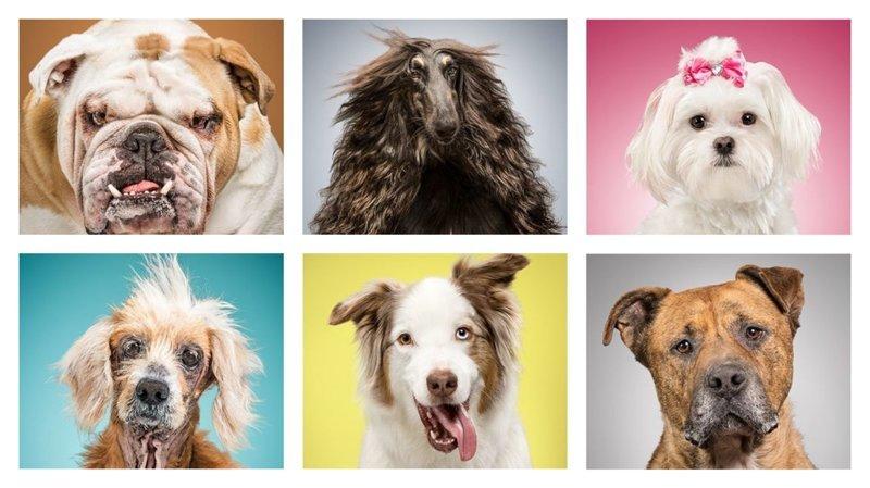 Итак, у нас есть шесть собак забавно, загадка, портреты животных, собака, собаки, фотопроект, характер, характеристики
