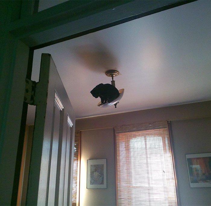 """12. """"На прошлой неделе наш котенок осознал, что умеет забираться наверх"""" коты, коты - криминалы, кошаки, кошачести, кошки, приколы, проказы, хулиганы"""