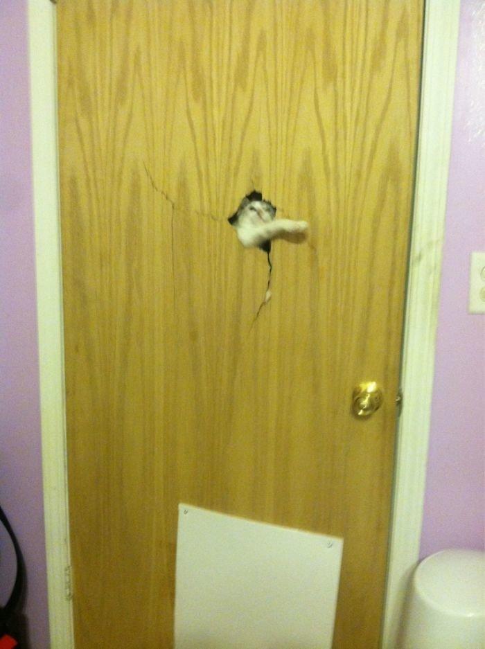 """14. """"Заперли наших кошек в другой комнате, чтобы не мешали младенцу. В два часа ночи услышали дикие звуки и увидели вот это"""" коты, коты - криминалы, кошаки, кошачести, кошки, приколы, проказы, хулиганы"""