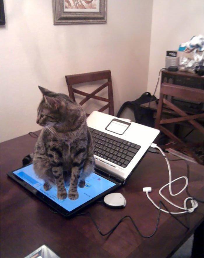 """20. """"Что, не сидеть на клавиатуре? А, ну ладно"""" коты, коты - криминалы, кошаки, кошачести, кошки, приколы, проказы, хулиганы"""