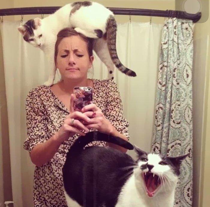 """28. """"Когда пытаешься сделать селфи с любимыми кошками"""" коты, коты - криминалы, кошаки, кошачести, кошки, приколы, проказы, хулиганы"""
