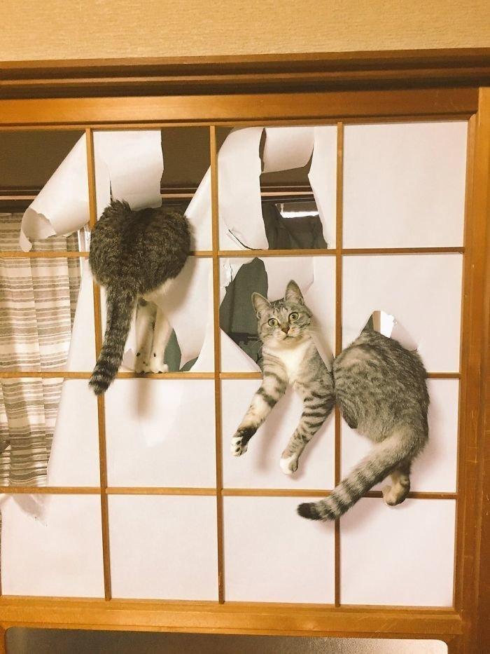 """5. """"Что-то ты сегодня рано вернулся домой, человек"""" коты, коты - криминалы, кошаки, кошачести, кошки, приколы, проказы, хулиганы"""