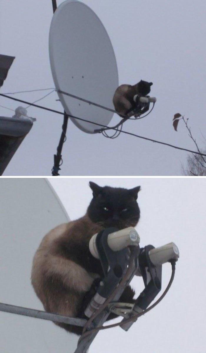 """11. """"Я изменил ваш сигнал. Молитесь, чтобы я на этом остановился"""" коты, коты - криминалы, кошаки, кошачести, кошки, приколы, проказы, хулиганы"""