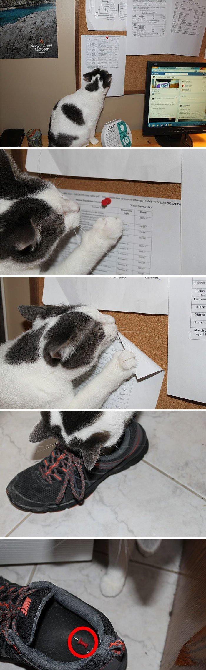 1. Застукана за своими гнусными проделками коты, коты - криминалы, кошаки, кошачести, кошки, приколы, проказы, хулиганы