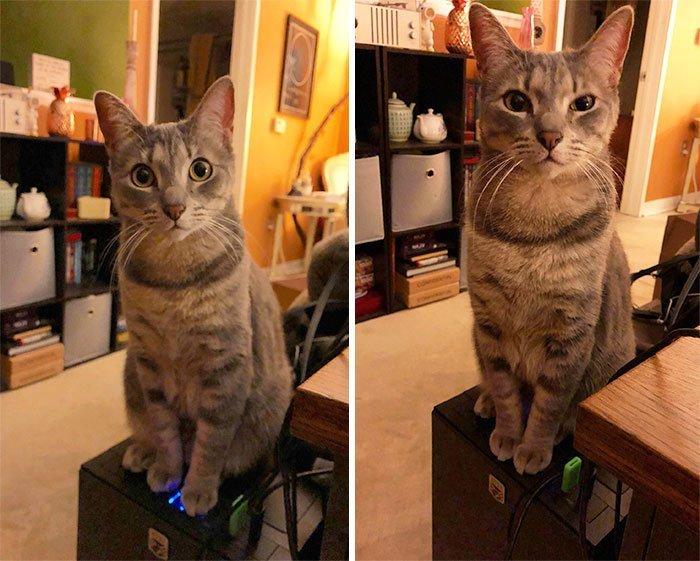 """4. """"Из-за этого засранца только что потерял 40 минут работы. Если у вас есть кошка, не покупайте компьютер с выключением питания на верхней панели"""" коты, коты - криминалы, кошаки, кошачести, кошки, приколы, проказы, хулиганы"""