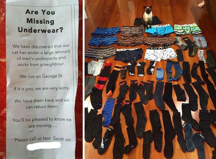 3. Обращение к соседям: если у вас пропали трусы или носки, посмотрите внимательно коты, коты - криминалы, кошаки, кошачести, кошки, приколы, проказы, хулиганы