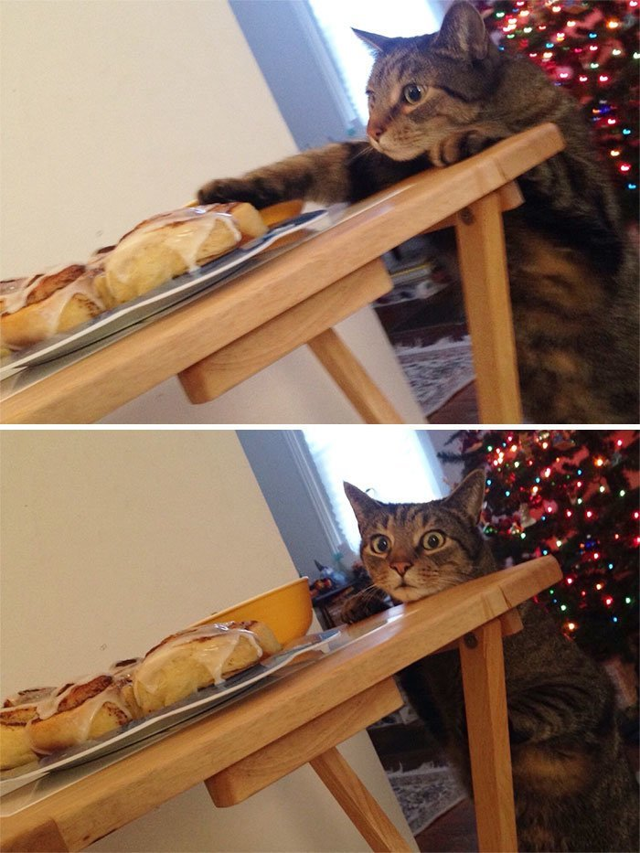 """19. """"Через секунду после того, как ему сказали, что со стола воровать нельзя"""" коты, коты - криминалы, кошаки, кошачести, кошки, приколы, проказы, хулиганы"""