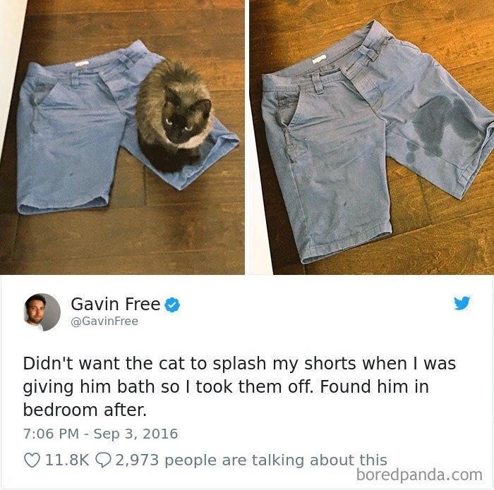 """18. """"Решил искупать кота и снял шорты, чтобы не намочить их. После купания застал вот такую картину"""" коты, коты - криминалы, кошаки, кошачести, кошки, приколы, проказы, хулиганы"""