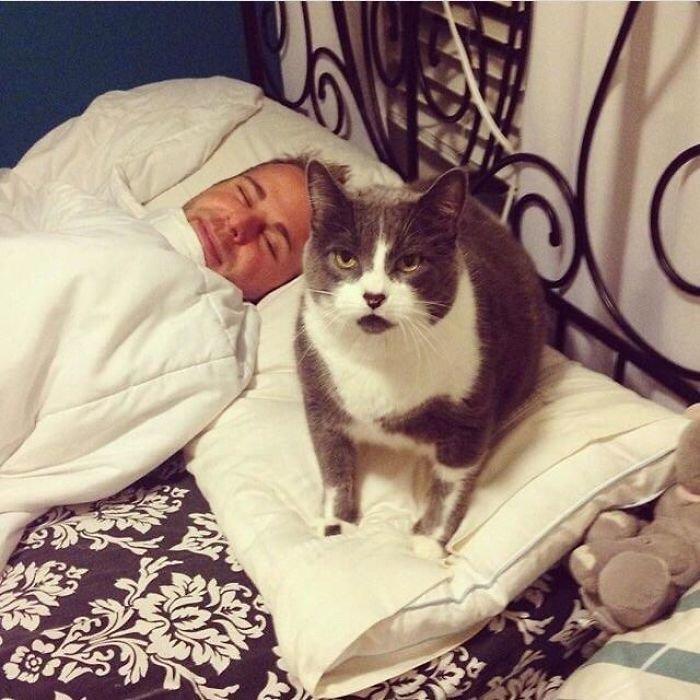 """29. """"Твои подушка и бойфренд - мои"""" коты, коты - криминалы, кошаки, кошачести, кошки, приколы, проказы, хулиганы"""