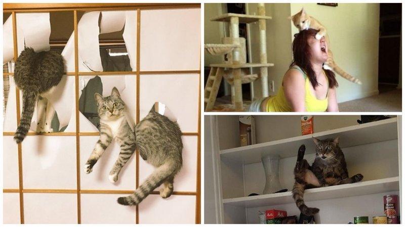 30 фотографий котов-скотов коты, коты - криминалы, кошаки, кошачести, кошки, приколы, проказы, хулиганы