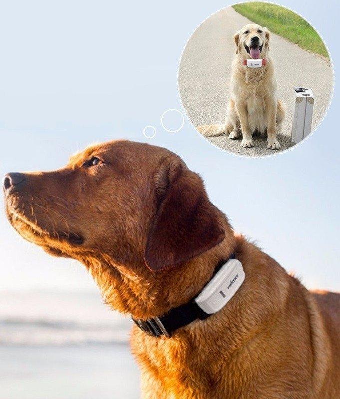 10. И еще один GPS-трекер для животных GPS, aliexpress, gps-трекер, гаджет, магазин, покупки, путин