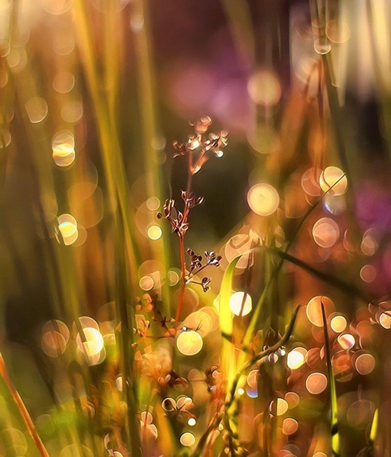 Волшебство и сказка в красивых фотографиях красота, сказка, фотографии
