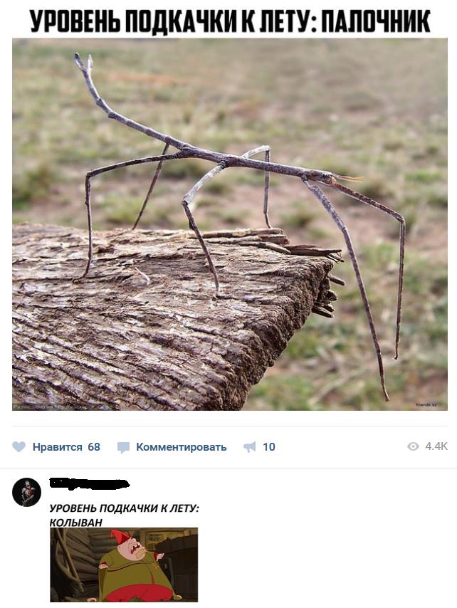 Смешные комментарии из социальных сетей из социальных сетей, смешные комментарии, юмор
