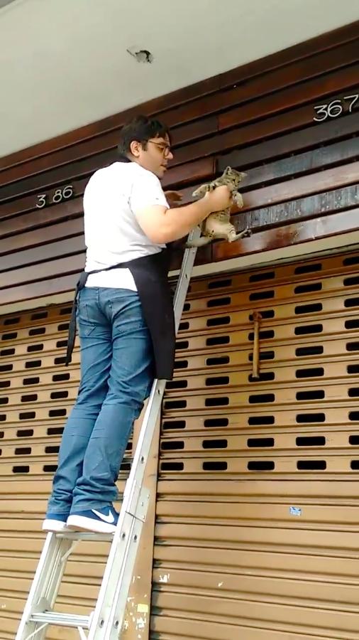 Чтобы спасти котенка, бразилец бросился ломать фасад чужого магазина в мире, добро, животные, люди, милота, спасение