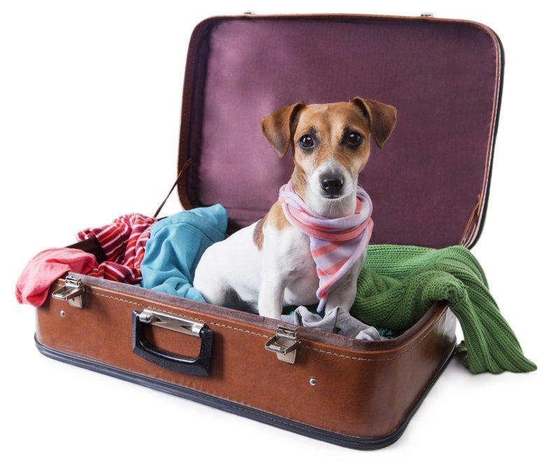 В Шереметьево иностранка уехала в багаж, пытаясь найти своих собак ynews, Шереметьево, аэропорт, багаж, собаки