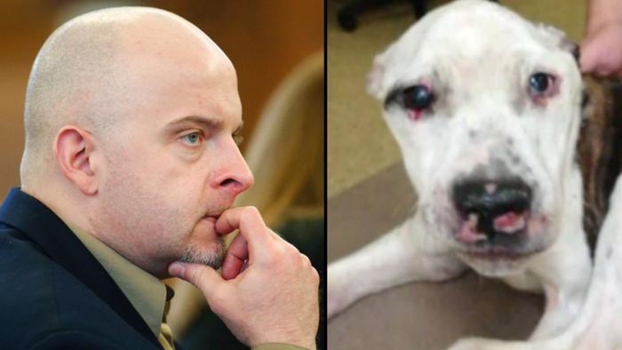 Живодёра, который избил пса так, что его пришлось усыпить, посадили на 10 лет история, наказание, собаки