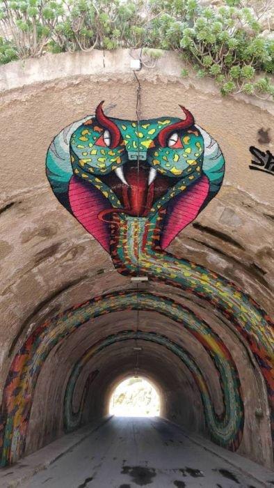 Кобра тоннельная день, животные, кадр, люди, мир, снимок, фото, фотоподборка