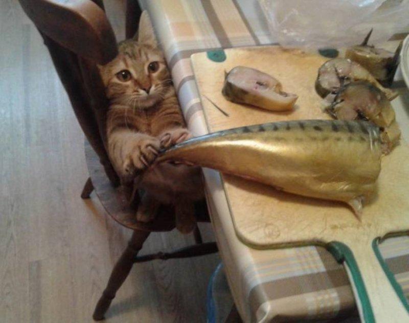 Любитель рыбки день, животные, кадр, люди, мир, снимок, фото, фотоподборка