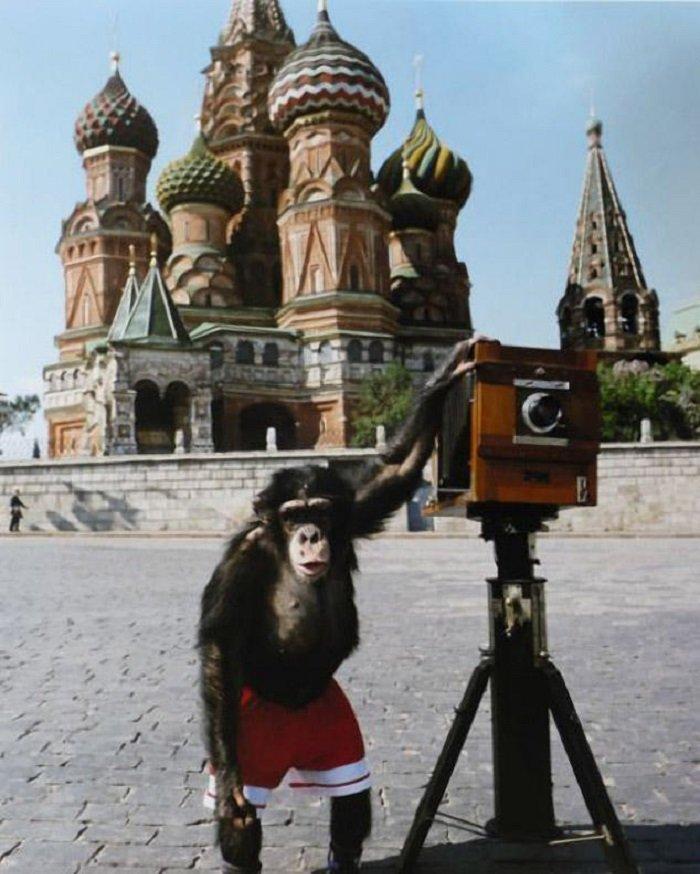 Фотографии Микки — шимпанзе, которого Виталий Комар и Александр Меламид учили делать фотографии на Красной площади. Три снимка были проданы за 50 тысяч фунтов стерлингов кадр, картина, люди, фото, фотограф, художник