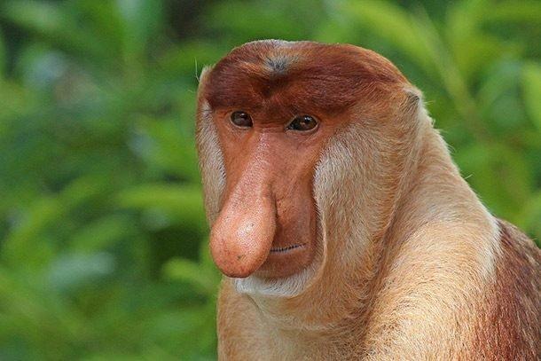 Обыкновенный носач или кахау в мире, внешность, животные, некрасивые, уродцы