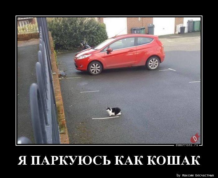 Я паркуюсь как кошак демотиватор, демотиваторы, жизненно, картинки, подборка, прикол, смех, юмор