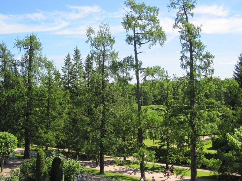 Красота, которая обычно за кадром. Екатерининский парк - Царское село Екатерининский парк, Царское село, красота, отдых, природа, пушкин