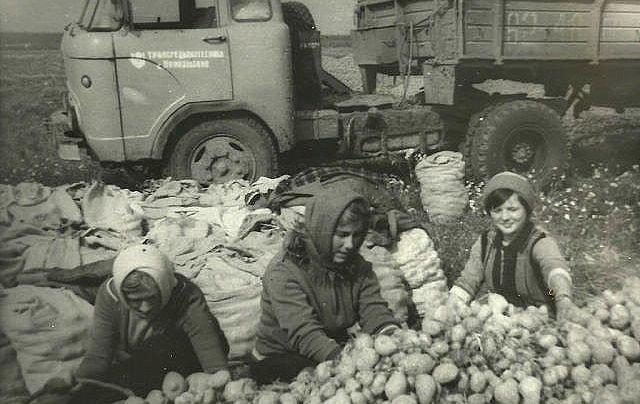 3. Студентки Пермского института культуры на уборке картофеля девушки, интересно, советские студенты, современные студенты, студентки, студенты, тогда и сейчас, фото