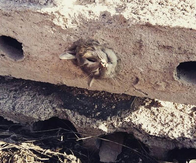 кошка в бетоне
