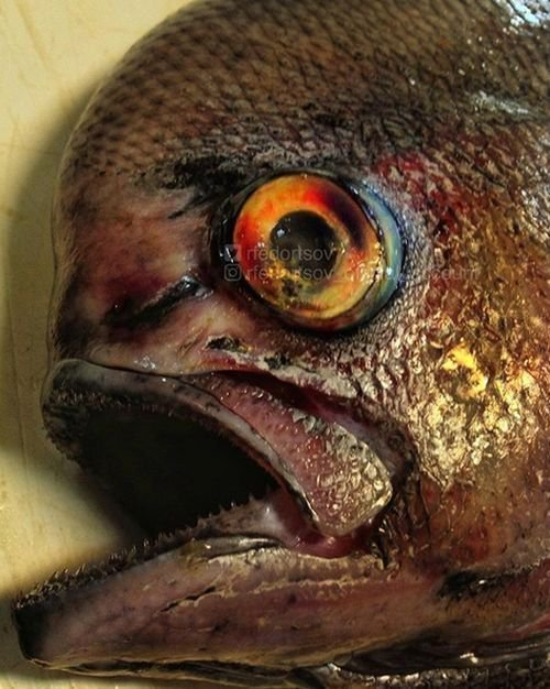 Необычные обитатели морских глубин на снимках рыбака еда, животные, море, рыба