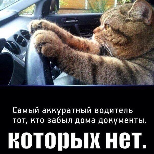 Доброе утро водители веселые картинки