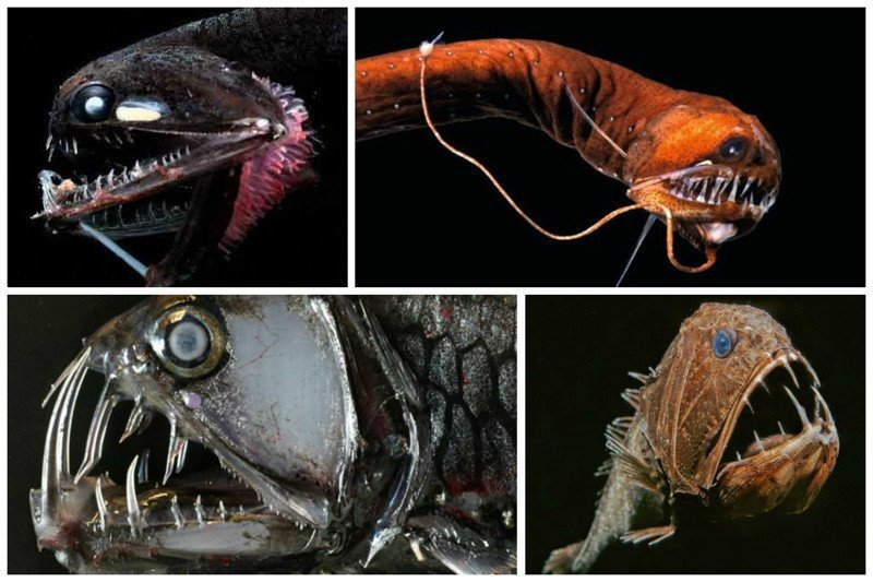 И еще немного об океанских монстрах из глубин батискаф, впадины, загадки, земля, интересное, океан, факты