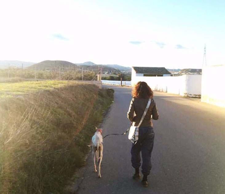 Собака со сломанной лапой шла 3 км, чтобы привести людей к своим щенкам в мире, добро, животные, собака, щенки