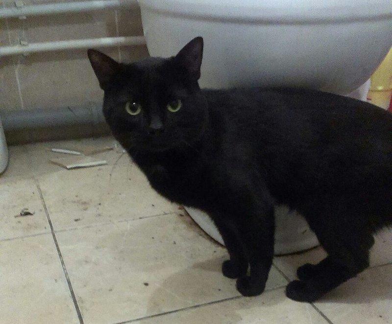 Житель Липецка выкинул кота с девятого этажа infiniti, видео, животные, кот, липецк, падение, хозяин