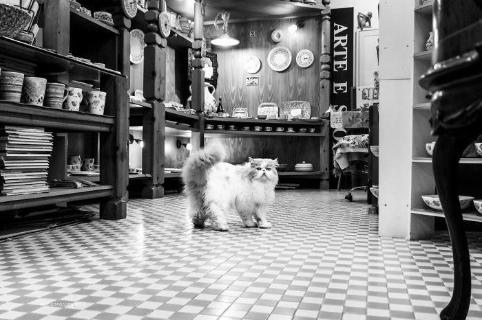2. Диас в посудной лавке домашние животные, коты, кошка, кошка в магазине, кошки, фотопроект, черно-белая фотография, черно-белое фото