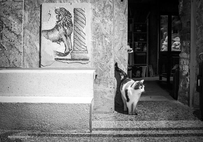 15. Григетта в магазине напольных покрытий домашние животные, коты, кошка, кошка в магазине, кошки, фотопроект, черно-белая фотография, черно-белое фото