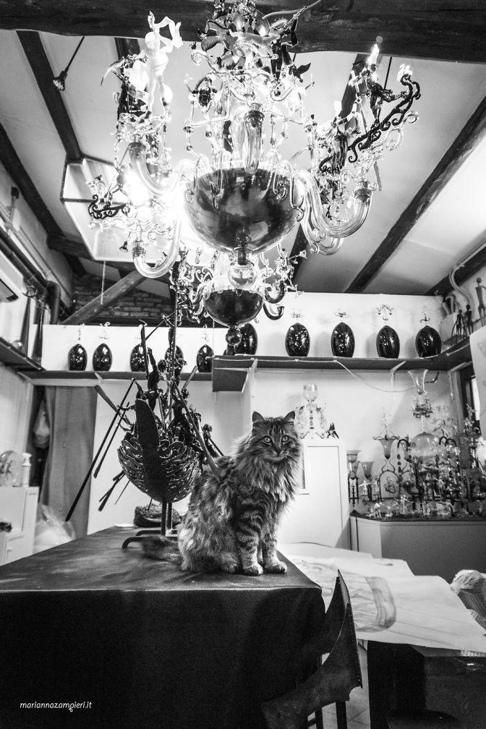 4. Гиуда в магазине стеклянных изделий домашние животные, коты, кошка, кошка в магазине, кошки, фотопроект, черно-белая фотография, черно-белое фото